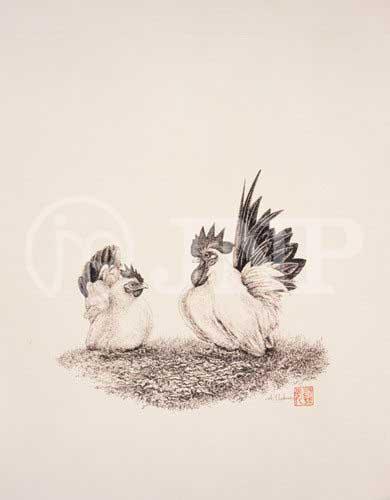 鶏 チャボ