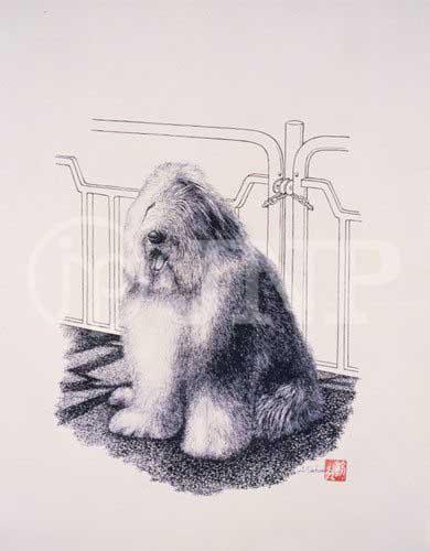 犬 オールドイングリッシュシープドッグ